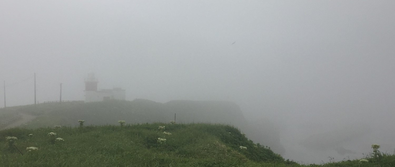 霧が育む根室の自然/根室市